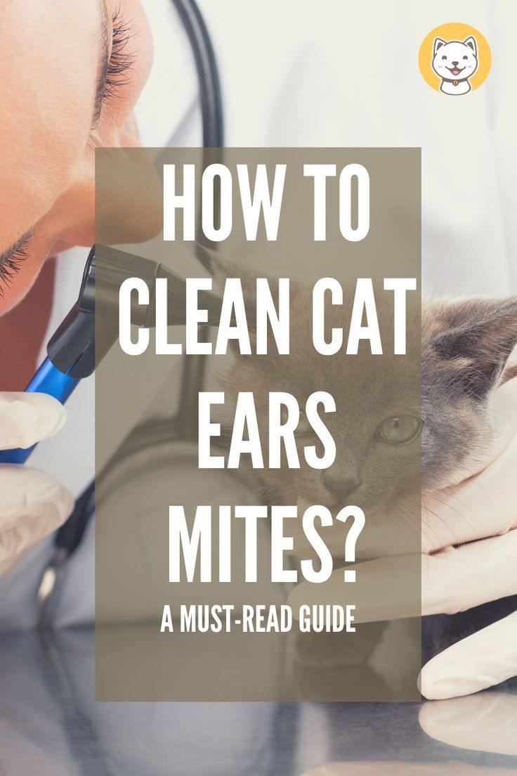 How to clean cat ear mites a mustread guide kitty cats