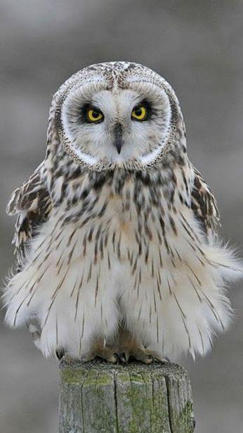 Owl in her best dress
