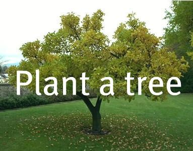 Already did, planted a tree for my lil sis Dana  who passed away 5 years ago on Feb 27th
