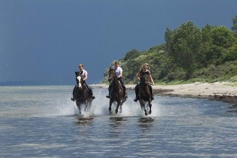 Zu Pferde über die Insel Poel, Reiterhof André Plath in Timmendorf ( #ostsee #superillu Foto: www.michaelhandelmann.de)