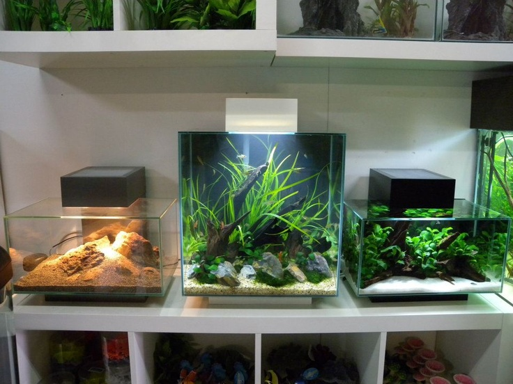 428 best Aquarium images on Pinterest Aquarium ideas