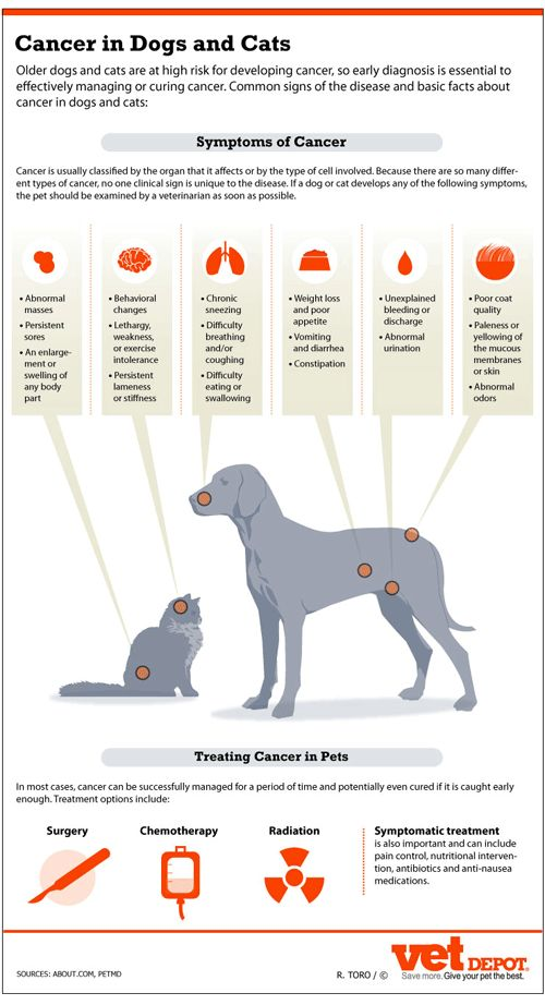 Signs of Cancer in Dogs and Cats Infographic