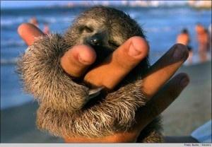 omgomgomg, sloth<3