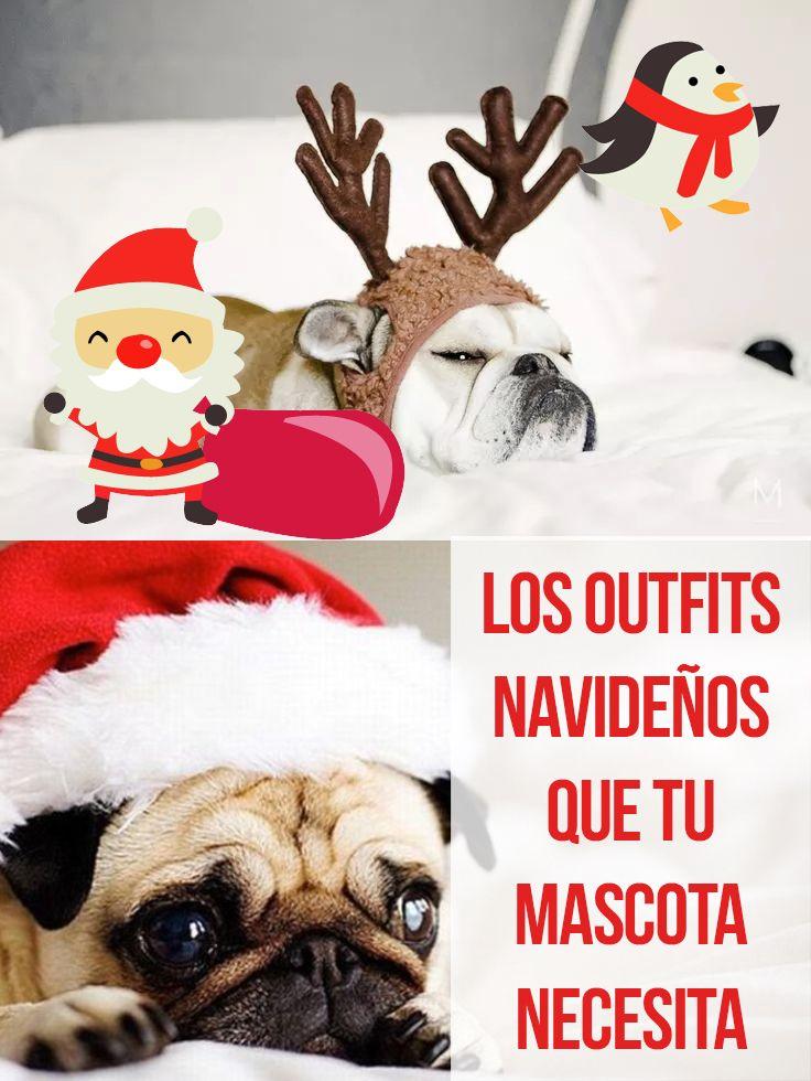 Los outfits Navideños que tu mascota necesita