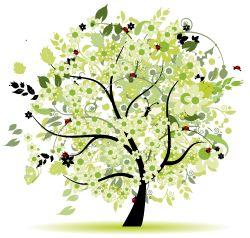 Le 25 migliori idee su arbusti sempreverdi su pinterest - Alberi da giardino di piccole dimensioni ...