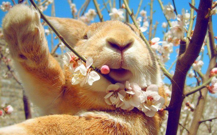 kaninchen gesicht blumen frühling  kaninchen süße