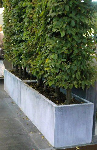 outdoor planters by outer eden - Titanium zinc with Hornbeam planting