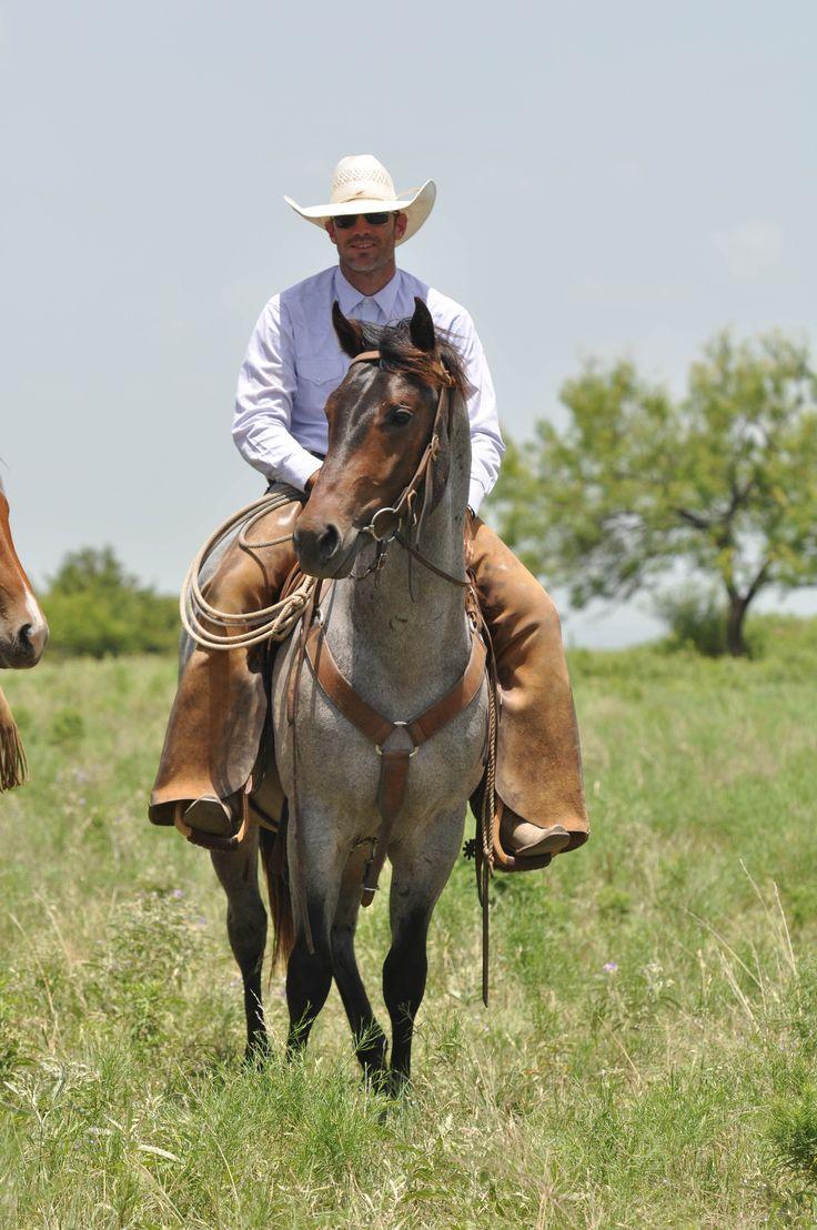 Cowboy Scot On Wwr Colt Www Wagonwheelranch Com Blue Roan