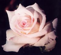 Geschmackssachen.: So schmeckt der Name der Rose.