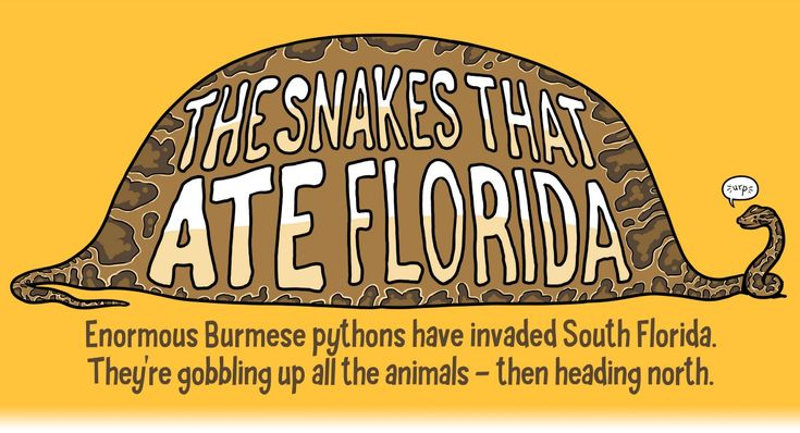 """Burmese pythons are gobbling up all the animals—then heading north. """"The Snakes That Ate Florida"""" is published by Andy Warner in The Nib"""