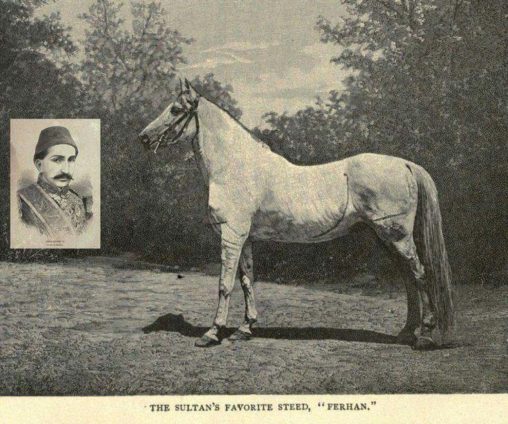 Sultan Abdülhamid'in Gözde Atı Ferhan 1900