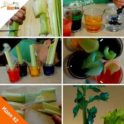 В нашей серии идей лета было множество творческих поделок и экспериментов. Сегодня мы предлагаем практически магическое занятие – заставим сельдерей покраситься в другой цвет!
