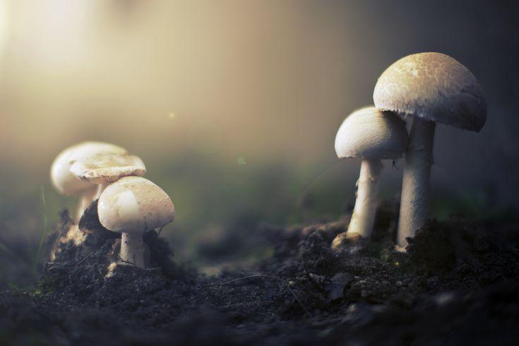softshroom