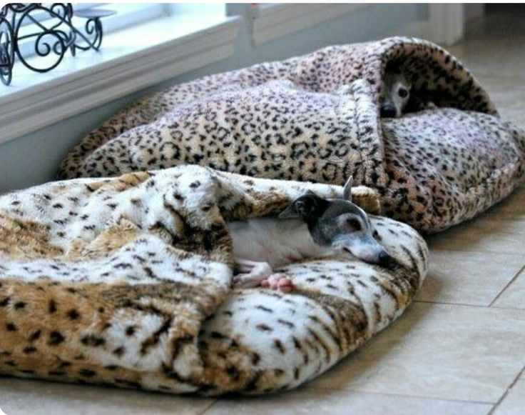 Looking for comfortable beds for your dog? Check our wide selection at www.petpossibilities.com to get more ideas. You can also get huge discounts in our shop. Just copy the URL in your browser and enjoy :)