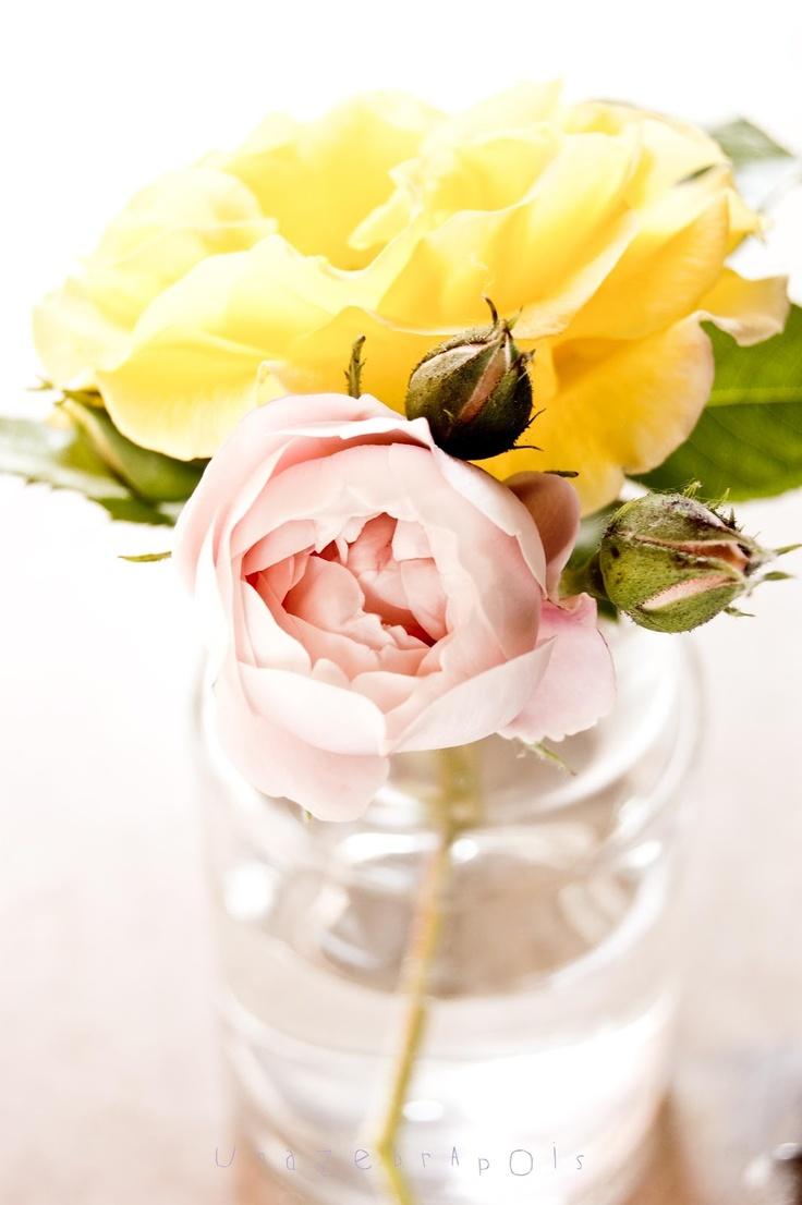 .: Idea, Plants Rose, Favorite Colors, Flora, Sweet Smell, Flowers Cut, Mason Jars, Photo, Flowers Inspiration