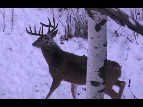 The most AMAZING Deer Hunting Video EVER!!! Deer meat for days..and it's a 10 pointer...