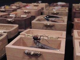 Home - Scott Cesari's Fly Tying