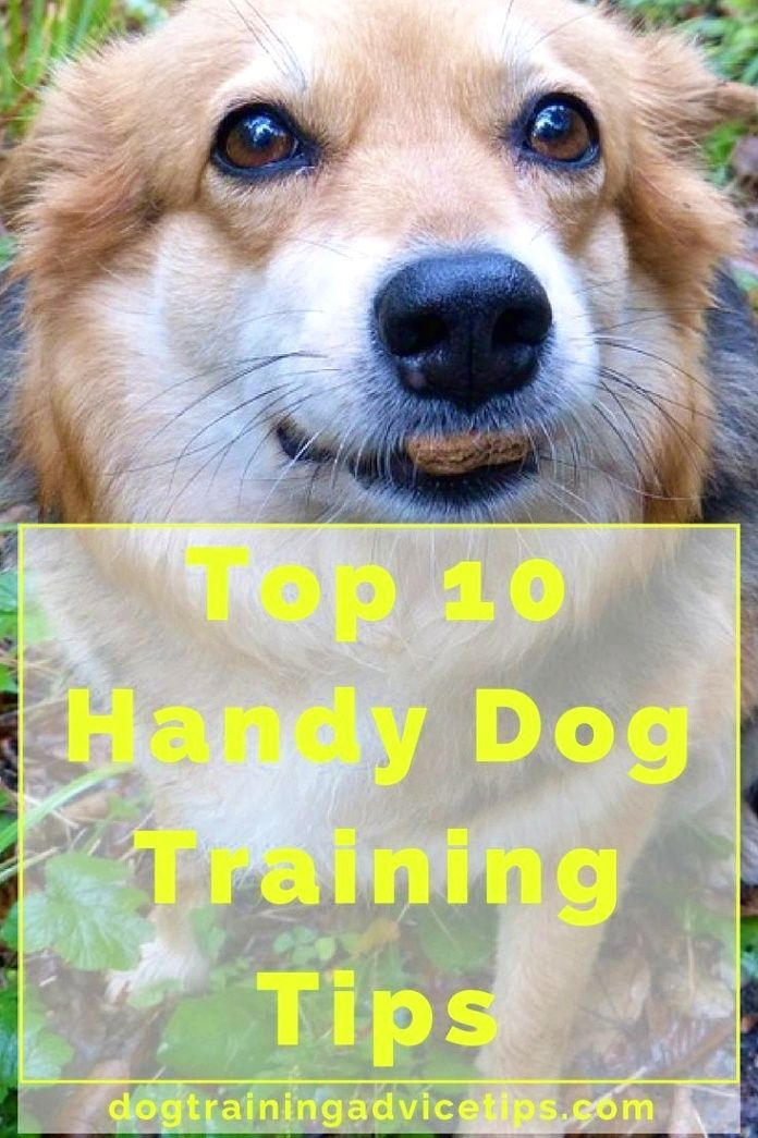 Dog Training Tips A Spray Bottle Filled Up With Water In Your Dog