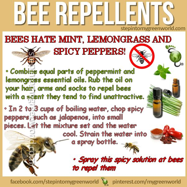☛ BY POPULAR DEMAND: BEE REPELLENTS HOMEMADE RECIPES.  Try them they REALLY work!  FOR ALL THE DETAILS AND MORE TIPS:  http://www.stepintomygreenworld.com/helathyliving/around-the-home/bee-repellent/  ✒ Share | Like | Re-pin | Comment