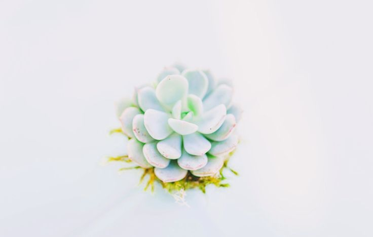 Birds eye view of a sweet little succulent.