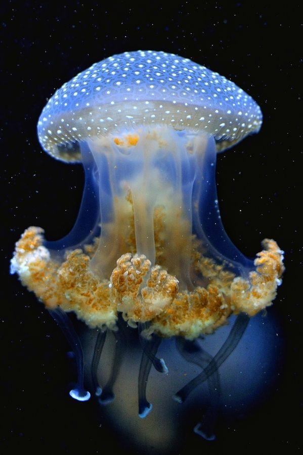 Rising jellyfish .... How beautiful