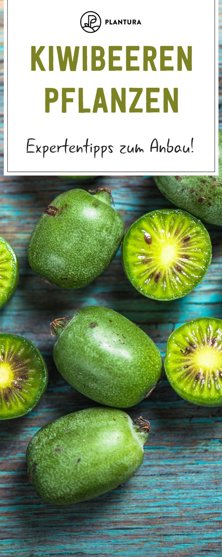 Kiwibeeren pflanzen: Experten-Tipps zum Anbau von Mini-Kiwis