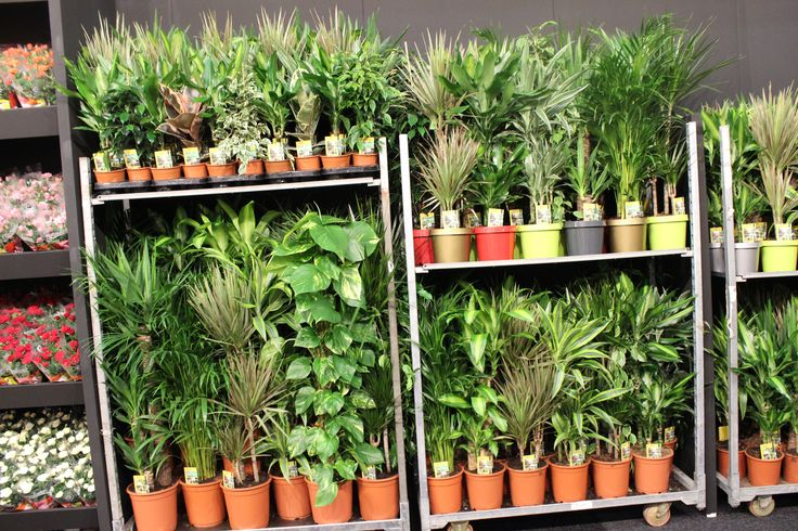 Green plants - big variety  indoor  plants - Holand to the world   GROW GREEN. PT