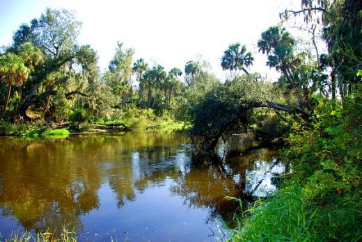 the Peace River at the TT Campground in Wauchula FL