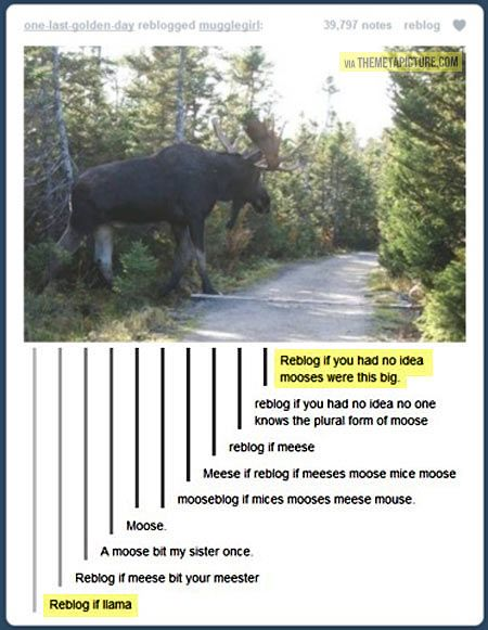 that is a friggin' huge moose..... must be the Sam moose..... are there more Sam meeses?