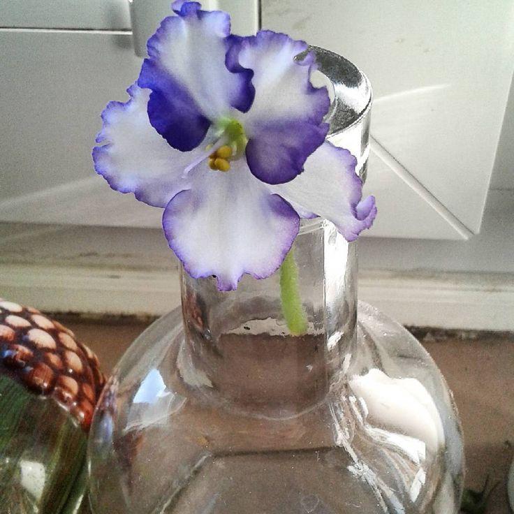Taki sobie bukiecik.Szkoda mi było kwiatka wyrzucić.Niech chwilkę jeszcze cieszy oczy.#fiołek#bukiecik #violet #bouquet #flower