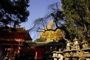 Lanternes de pierre au sanctuaire Kasuga Taisha, Nara, Japon