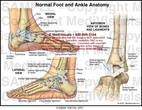 Anatomy of the foot and ankle tendons
