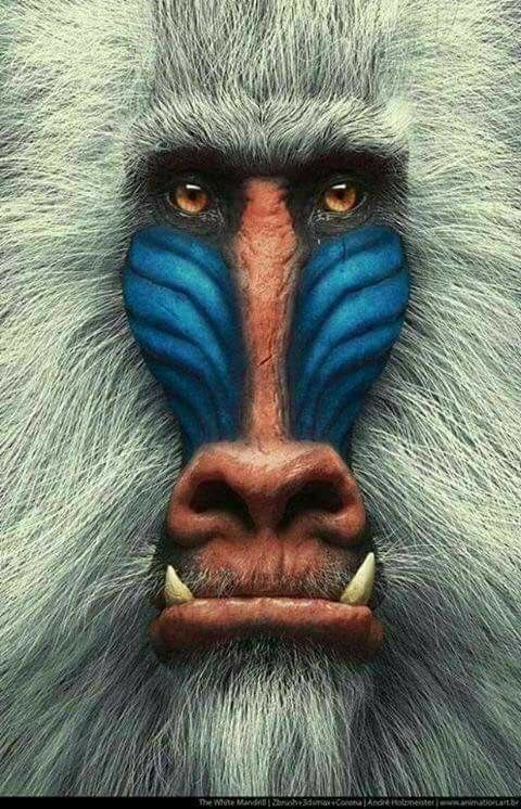 Pin by Peter Hain on Tiere | Pinterest | Animal, Monkey and Primate