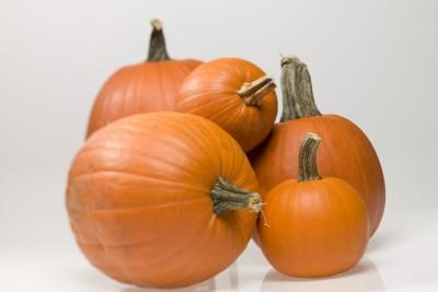 How to Pick Pumpkins When They're Not Ripe. The More links have other great punmpkin-growing tips.