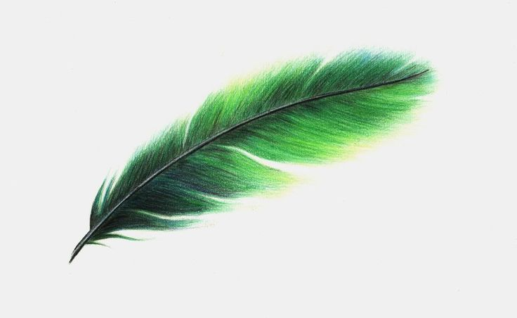 Feather Feathers Green Inspiration Feathers