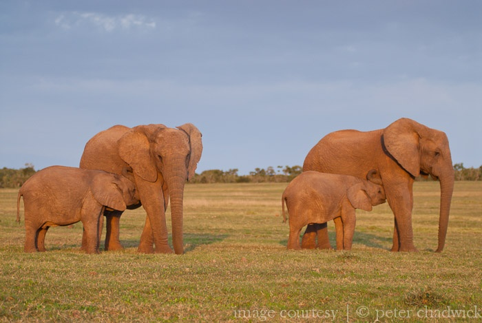 Addo Elephant National Park | Image by Peter Chadwick