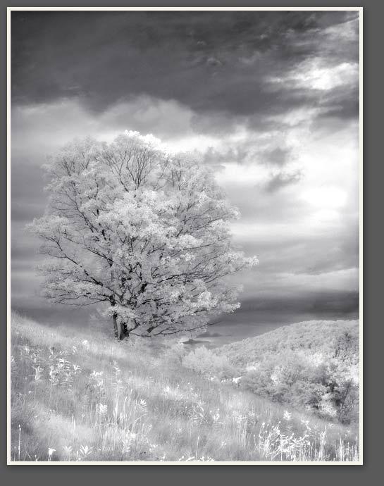 Infrared Maple, John Lehet