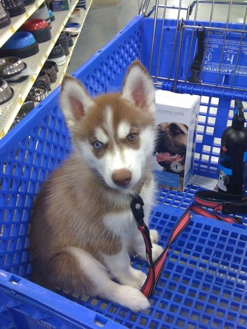 Actually a good way to keep your pet safe from kids in pet smart or other pet-friendly stores .... Put dog in the basket to keep him/her safe from those who do not know how to properly approach another's dog...