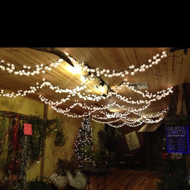 Backyard Twinkle Lights