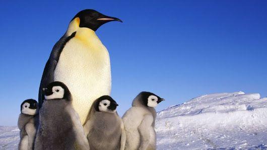 Hungry penguins help keep car code safe - BBC News