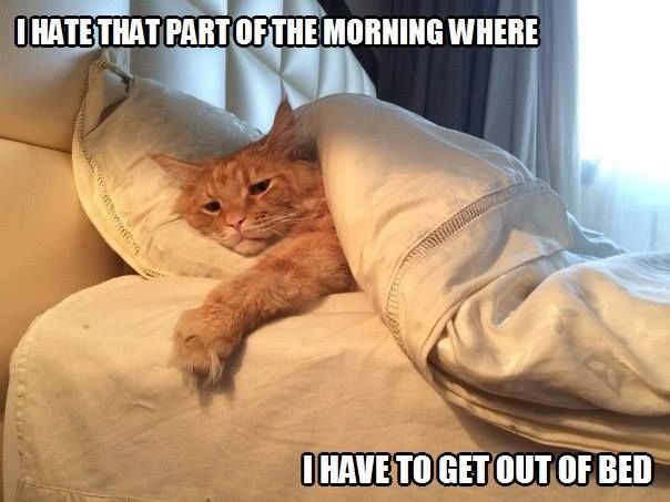 I HATE THAT PART OF THE MORNING WHERE I HAVE TO GET OUT OF BED