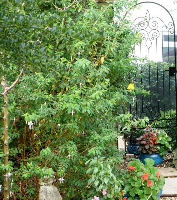 Illusion wrought iron gateway garden mirror