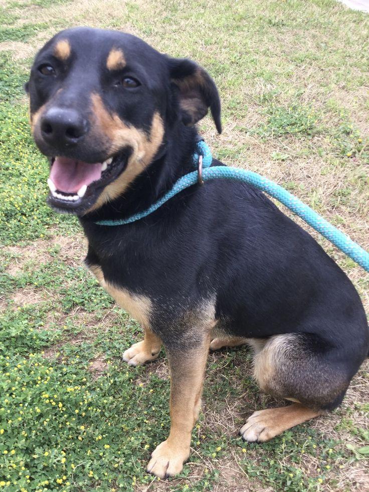 Adopt REMY on Petfinder Help homeless pets, Dog adoption