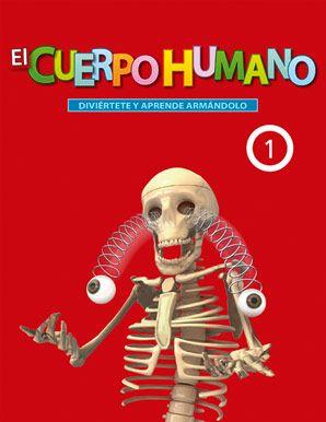 25 melhores ideias de Esqueleto del cuerpo humano no Pinterest