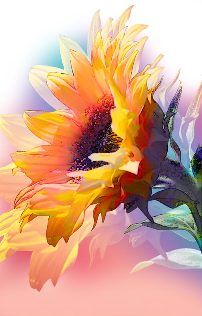 Lara Skinner - LD446_PSG_Autumn_sunflower.jpg                                                                                                                                                     More