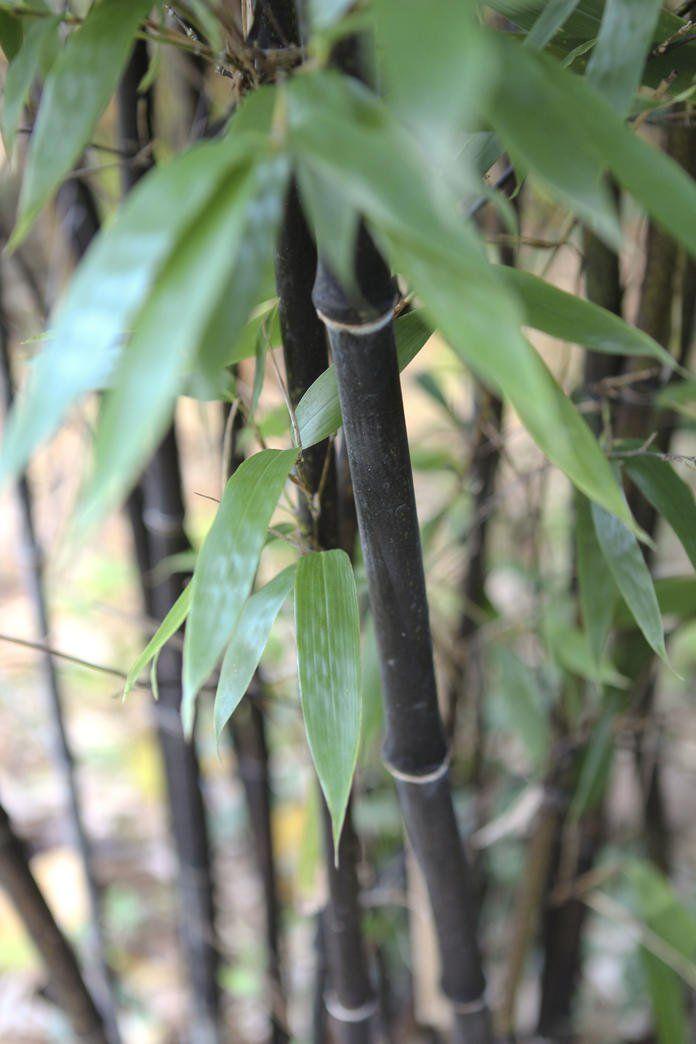 Bambus Garten Und Balkon Pinterest