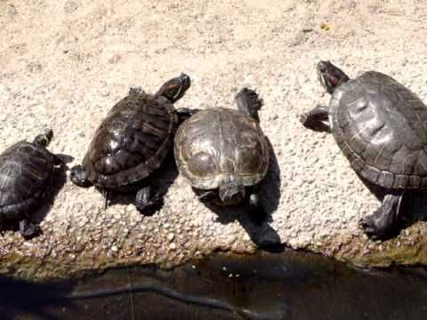 My turtles in the summer 2011 - part one