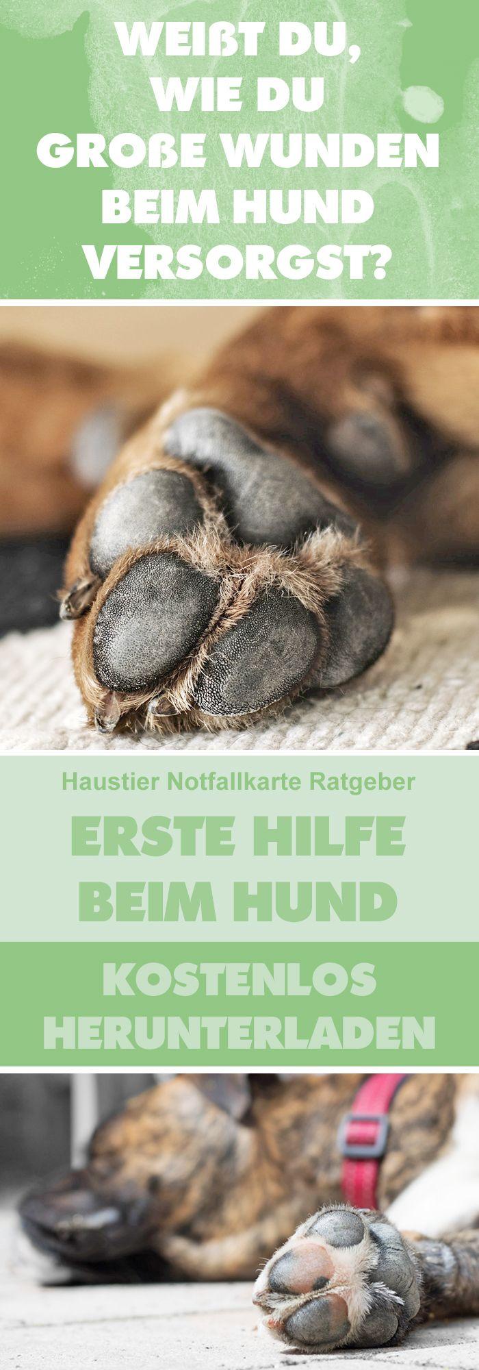 Weißt Du, wie Du große Wunden beim Hund versorgst? Lade Dir unseren kostenlosen Haustier Notfallkarte Ratgeber Erste Hilfe beim Hund herunter! #haustier #notfallkarte
