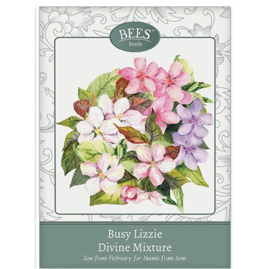 Buy Bees Seeds - busy lizzie Impatiens 'Divine Mixture'