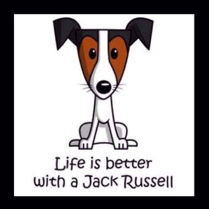 "Jack Russell Terrier ""Kelly"" ❤️"